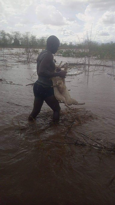 Officer Kevin Otunga carrying several sheep across a flooded river, October 21, 2019
