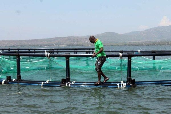 A cage fishing project pictured at Ong'ukwa Beach in Homa Bay County
