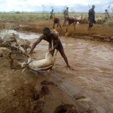 Officer Kevin Otunga rescues drowning livestock from a river on Marsabit, October 21, 2019