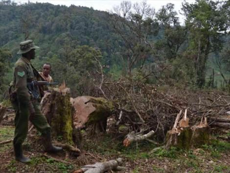 A Kenya Forest Service officer looks at the massive destruction of the Maasai Mau Forest in Kosian area of Narok South subcounty