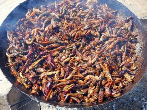 A pan filled with grasshoppers.