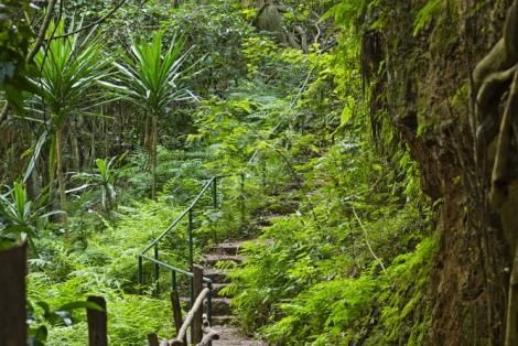 A nature trail at Karura forest in Nairobi.