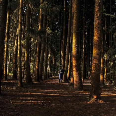 A section of the vast Karura Forest, Nairobi.