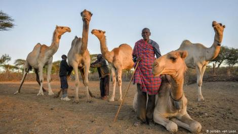 File image of a herder posing with his camels