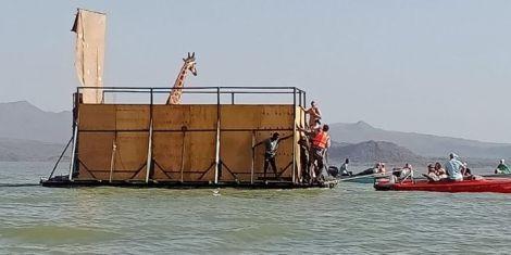 KWS rescues a giraffe on Wednesday, January 27