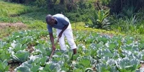 Deputy President William Ruto's look alike at an unidentified farm on Thursday, April 2, 2020