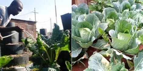 The urban garden set up by the youth of Komb Green solutions