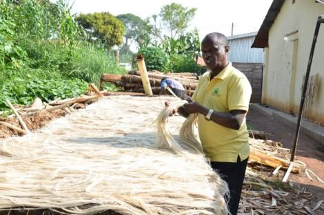 Muturi's company deals with the production of hand woven textiles by turning banana waste into Rugs, fabrics and hair extensions.