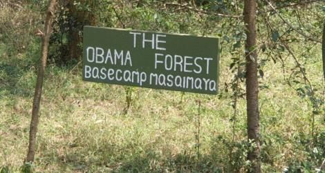 The Obama Forest at the Basecamp in the Masai Mara