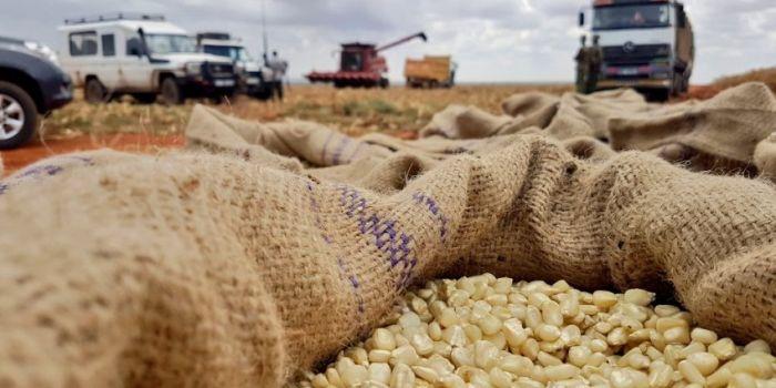 Image result for maize in kenya